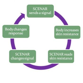 SCENAR SKENAR Feedback-cycle