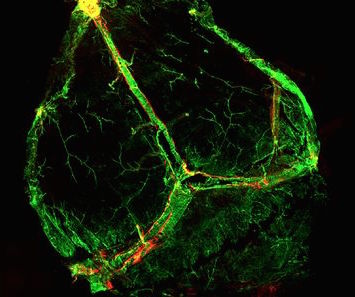 New Discovery in Neuroscience and What It Means to You